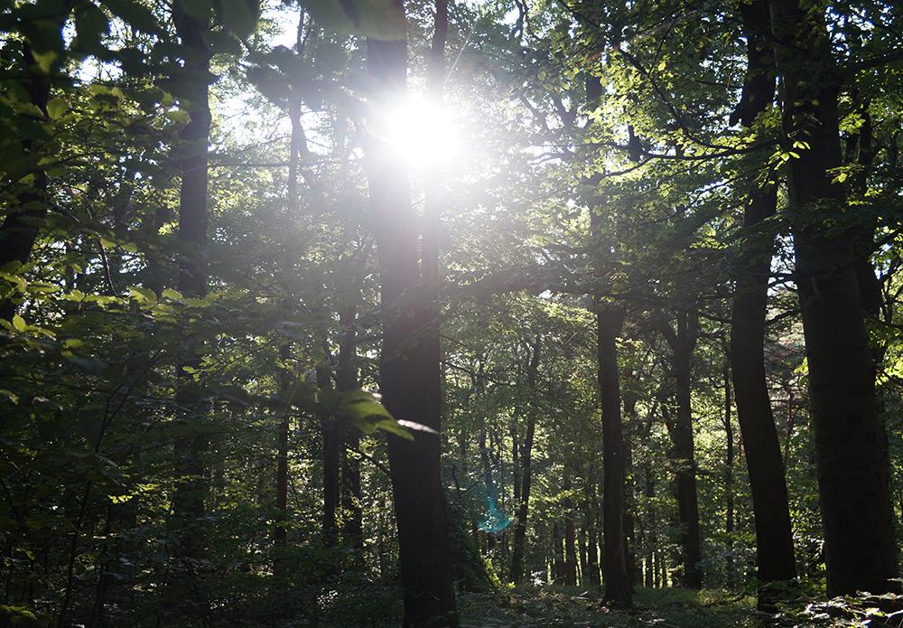Baumbestattung im Wald der Ewigkeit am Gießhübl_Naturbestattung GmbH