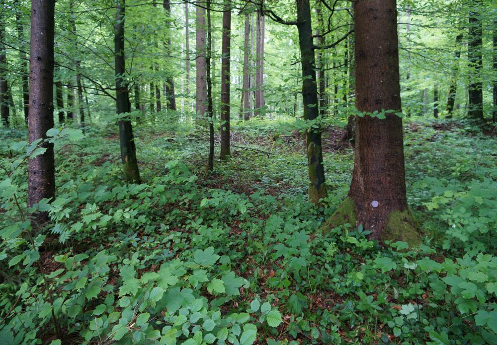 Wald-der-Ewigkeit-Kundl-Tirol4_Naturbestattung-GmbH