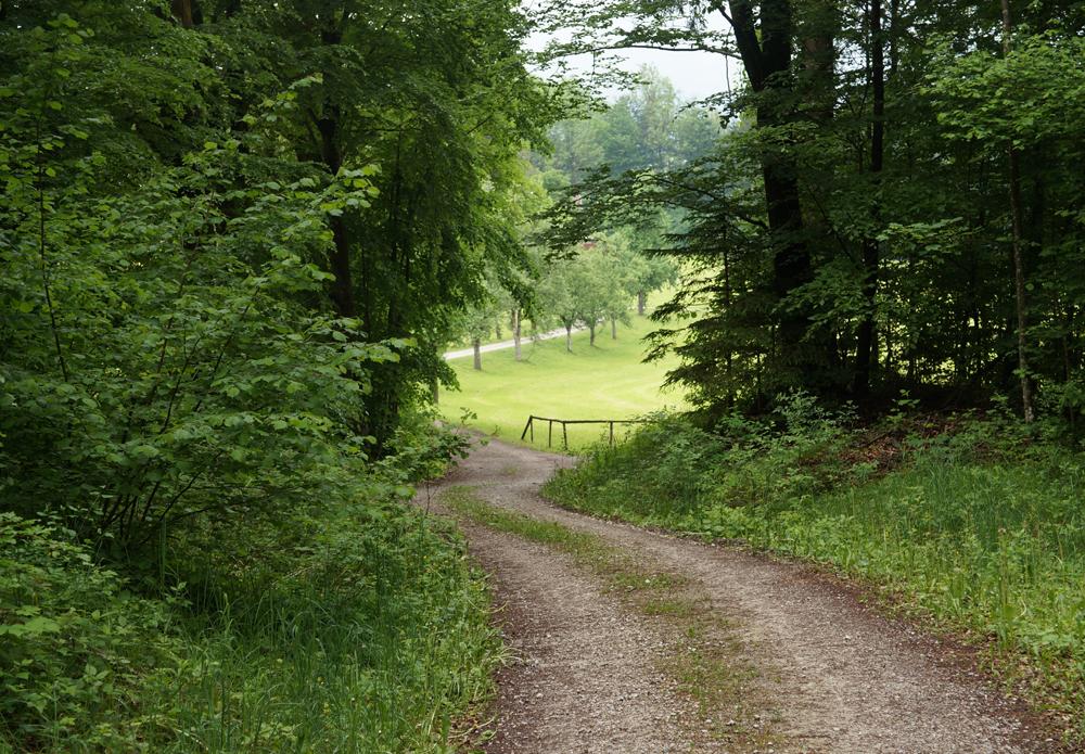 Wald-der-Ewigkeit-Kundl-Tirol5_Naturbestattung-GmbH