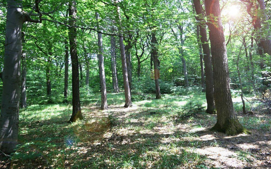 Baumbestattung Giesshübel Grosser Baum