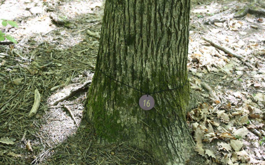 Baumbestattung Giesshübel Kleiner Baum