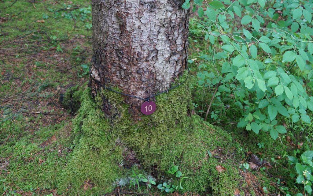 Baumbestattung Kundl Grosser Baum