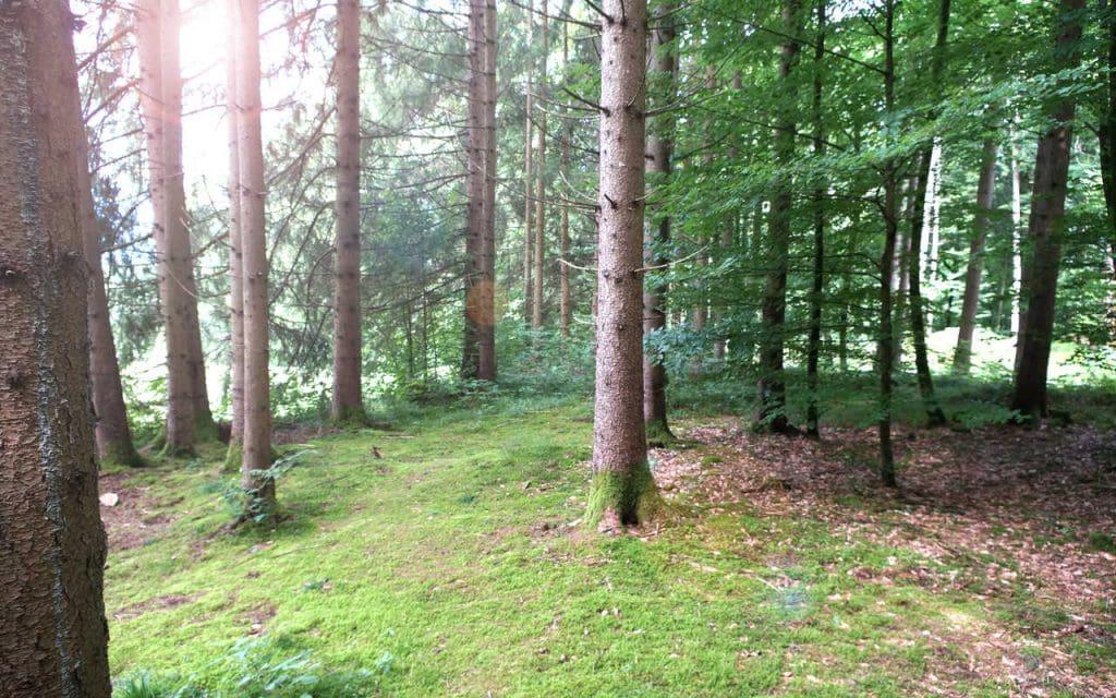 Baumbestattung Kundl Kleiner Baum