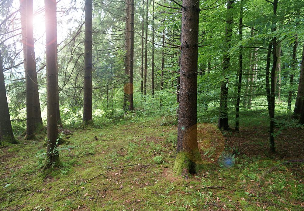 Baumbestattung im Wald der Ewigkeit in Kundl Tirol Waldfriedhof_Naturbestattung Gmbh Zadrobilek