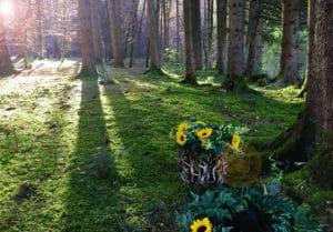 Baumbestattung und Urnenbeisetzung im Wald der Ewigkeit in Kundl Tirol Waldfriedhof_Naturbestattung Gmbh Zadrobilek