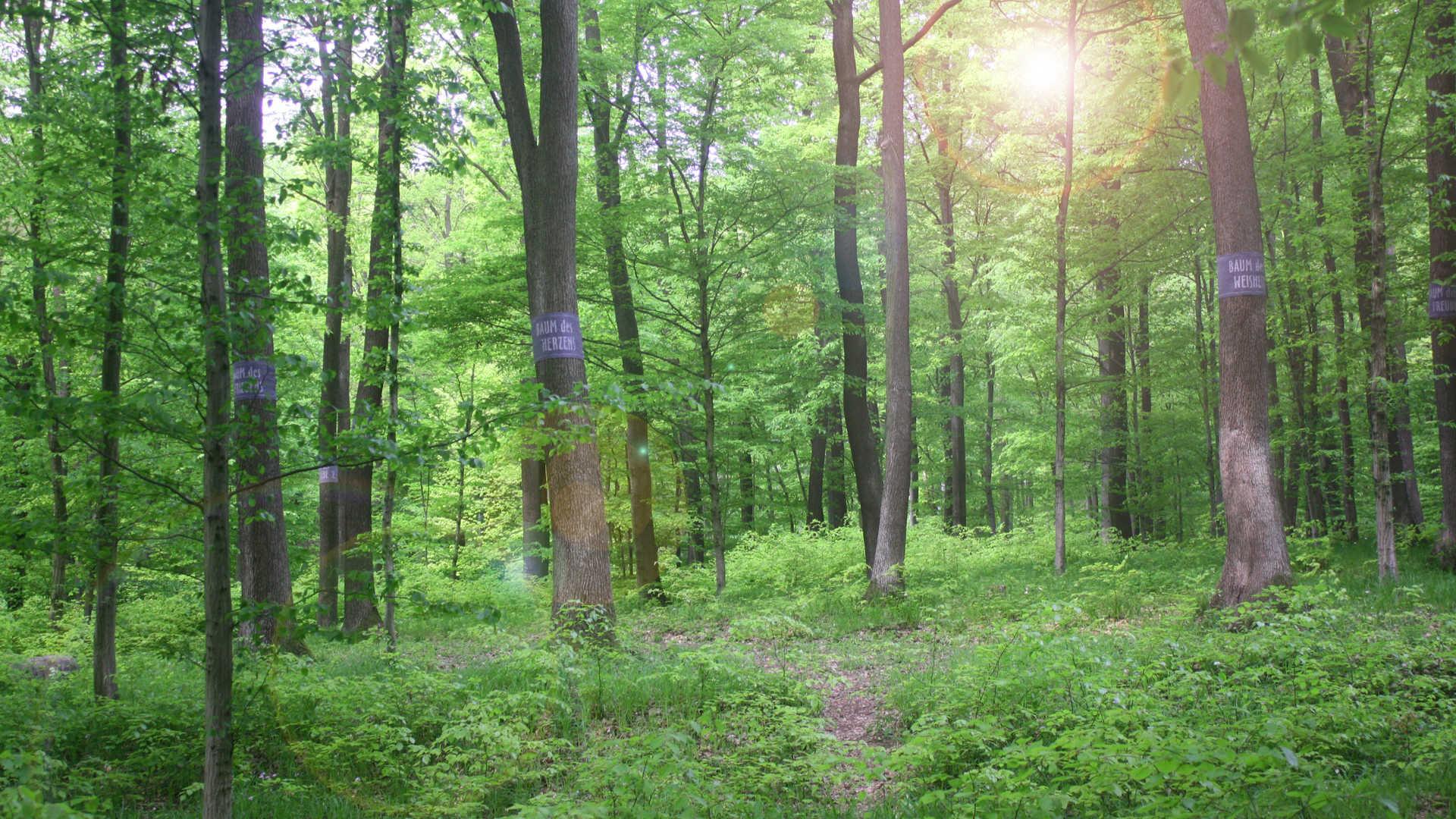 Baumbestattung Wald der Ewigkeit 1140 Wien