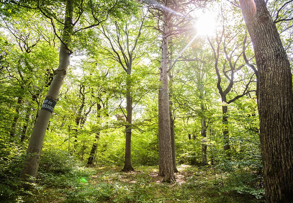 Baumbestattung im Wald der Ewigkeit in Gießhübl / Mödling bei Wien Waldfriedhof_Naturbestattung Gmbh Zadrobilek