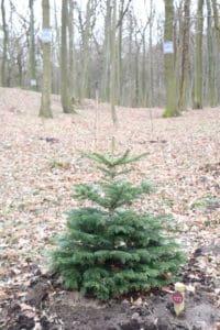 Noch mehr Vielfalt im Wald der Ewigkeit in Bisamberg Naturbestattung GmbH